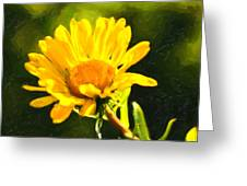 Moment In The Sun - Golden Flower - Northern California Greeting Card by Mark E Tisdale