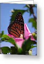Monarch 2 Greeting Card by Tannis  Baldwin