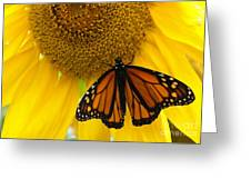 Monarch And Sunflower Greeting Card by Ann Horn