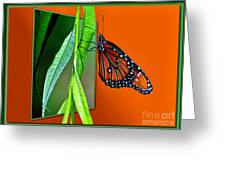 Monarch Butterfly 01 Greeting Card by Thomas Woolworth