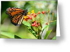 Monarch Butterfly 3 Greeting Card by Julie Cameron