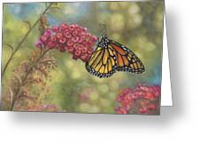 Monarch Butterfly Greeting Card by John Zaccheo