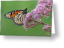 Monarch Butterfly Photography Greeting Card by Juergen Roth
