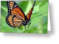 Monarch Dreaming Greeting Card by Neal  Eslinger