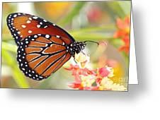 Monarch II Greeting Card by Pamela Gail Torres