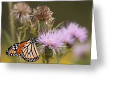 Monarch Greeting Card by Jim Finch