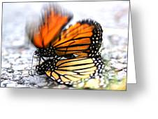 Monarchs In Love Greeting Card by Thomas Bomstad