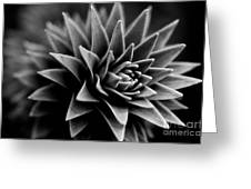 Monkey Puzzle Greeting Card by Venetta Archer