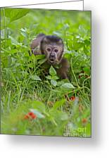 Monkey Shock Greeting Card by Ashley Vincent
