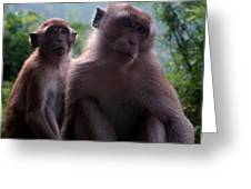 Monkey's Attention Greeting Card by Justin Woodhouse