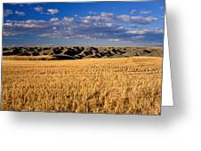 Montana   Field And Hills Greeting Card by Anonymous