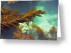 Monterey Bay Seaweed Greeting Card by Susan Wiedmann