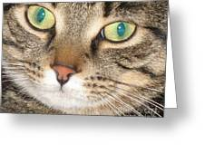 Monty The Cat Greeting Card by Jolanta Anna Karolska