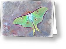 Moon Moth Actias Luna On Slate Rock Greeting Card by Robert Jensen