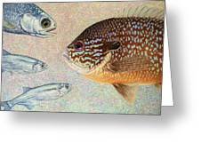 Mooneyes Sunfish Greeting Card by James W Johnson