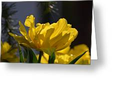 Moonlit Tulips Greeting Card by Maria Urso