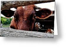Mooo I See You Greeting Card by Todd and candice Dailey