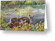 Moose In The Morning Greeting Card by Anne Gifford