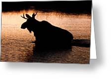 Moose Silhouette 3569 Greeting Card by Brent L Ander