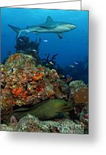 Moray Reef Greeting Card by Anna Bennett