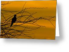 Morning Dove Greeting Card by Kelly Gibson