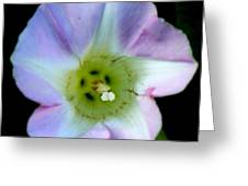 Morning Glory Floral Window Greeting Card by Neal  Eslinger