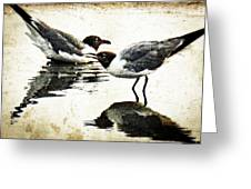 Morning Gulls - Seagull Art By Sharon Cummings Greeting Card by Sharon Cummings