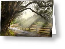 Morning Light Greeting Card by Debra and Dave Vanderlaan