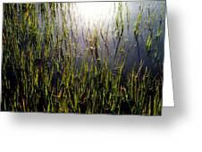 Morning Light Of God Greeting Card by Karen Wiles