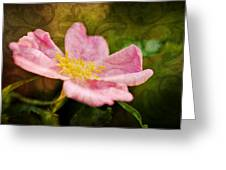 Morning Rose Greeting Card by Kelly Nowak
