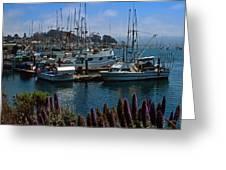 Morro Bay Harbor Greeting Card by Kathy Yates