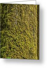 Moss Covered Tree Olympic National Park Greeting Card by Steve Gadomski