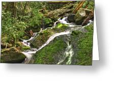 Mossy Creek Greeting Card by Debra and Dave Vanderlaan