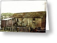 Mossy Shed Greeting Card by Linde Townsend
