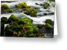 Mossy Spring Greeting Card by Shannon Beck-Coatney