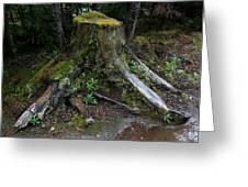 Mossy Tree Stump Greeting Card by Amanda Lee Tzafrir