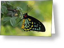 Most Beautiful Butterfly World Greeting Card by Juergen Roth