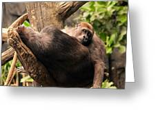 Mother And Youg Gorilla Sleeping In A Tree Greeting Card by Chris Flees