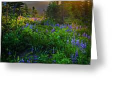 Mount Rainier Sunburst Greeting Card by Inge Johnsson