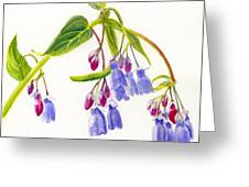 Mountain Bluebells Greeting Card by Sharon Freeman