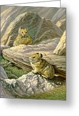 Mountain Haymakers - Pika Greeting Card by Paul Krapf