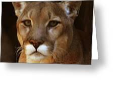 Mountain Lion Portrait Greeting Card by DiDi Higginbotham