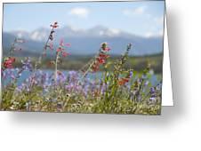 Mountain Wildflowers Greeting Card by Juli Scalzi