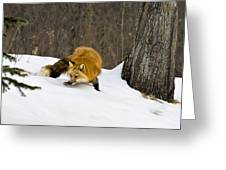 Mousing Greeting Card by Jack Milchanowski