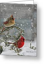 Mr. And Mrs. Cardinal Greeting Card by Denise Romano