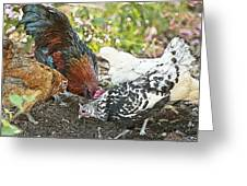 Mr. Rooster And All The Chickens Scratching For A Snack Greeting Card by Artist and Photographer Laura Wrede