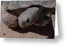 Mr. Tron - The Desert Tortoise Greeting Card by Martina Thompson