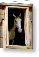 Mrs. Ed Greeting Card by Karen Wiles