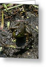 Mud Bath Greeting Card by Neal  Eslinger