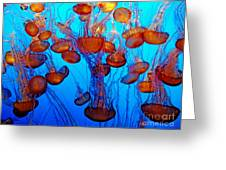 Multiple Jellyfish  Greeting Card by Jim Fitzpatrick